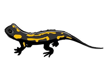 salamandra: salamandra, ilustraci�n de fauna, parque zool�gico, fauna, reptil