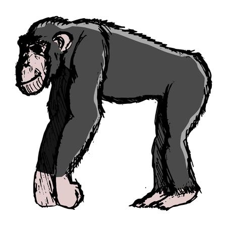 chimpanzee, illustration of wildlife, zoo, animal of jungle, Africa, safari