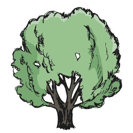 oak wood: oak, illustration of nature, forest