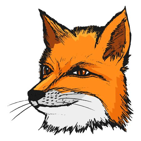 carnivores: fox, illustration of wildlife, animal of forest, sly, predator Illustration