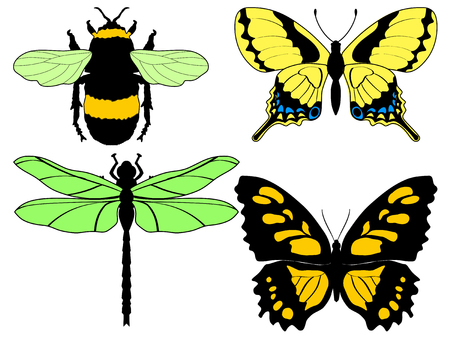 locust: set of vector illustrations of different insects