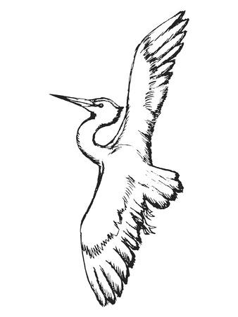 water bird: heron in flight, white heron, beauty in nature, flying heron, water bird heron, big bird, wildlife, wilderness, heron is bird of rivers and ponds, heron in sketch style, wild bird heron Illustration