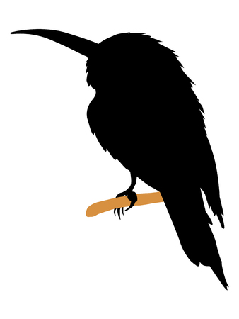 Silhouette of bee-eater Illustration
