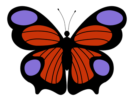 inachis: A vector illustration of peacock butterfly Illustration