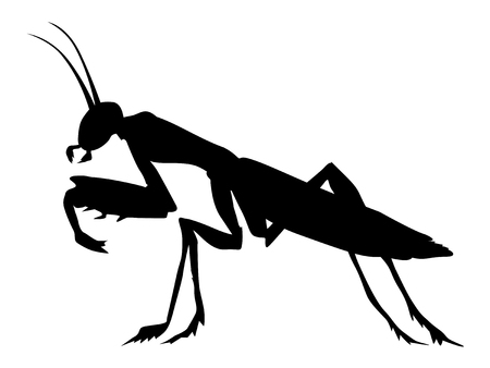 Silhouette of mantis