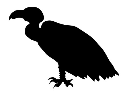 Silhouette of vulture Illustration