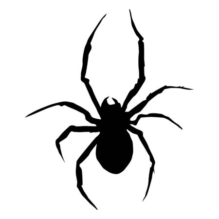 Silhouette of spider