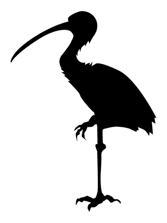 silhouette of ibis