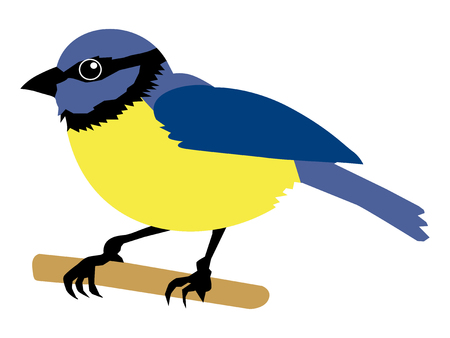 vector illustration of tit bird