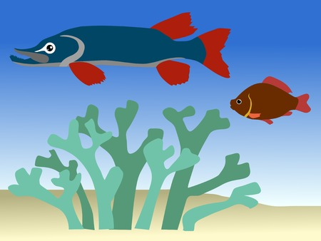crucian carp: vector illustration of fish