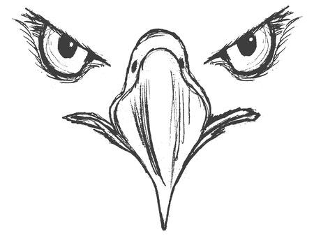 Hand drawn illustration of eagle