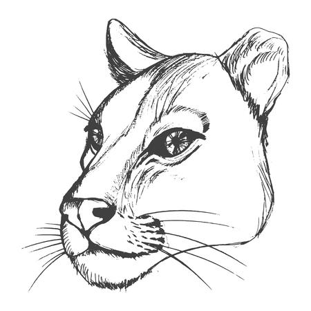 Hand drawn illustration of lioness