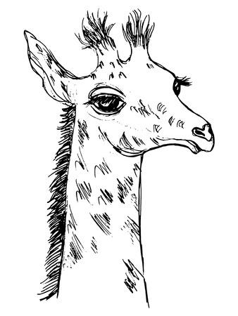 Hand drawn illustration of giraffe cub Illustration