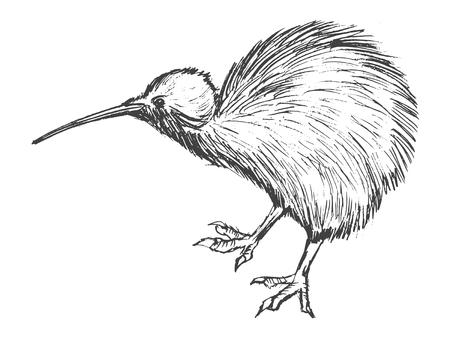 Hand drawn illustration of kiwi bird