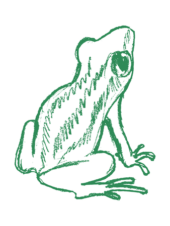 vector, sketch, hand drawn illustration of tree frog