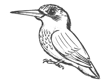 vector, sketch, hand drawn illustration of kingfisher