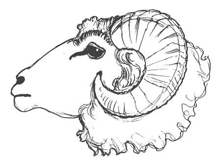 vector, schets, hand getekende illustratie van ram
