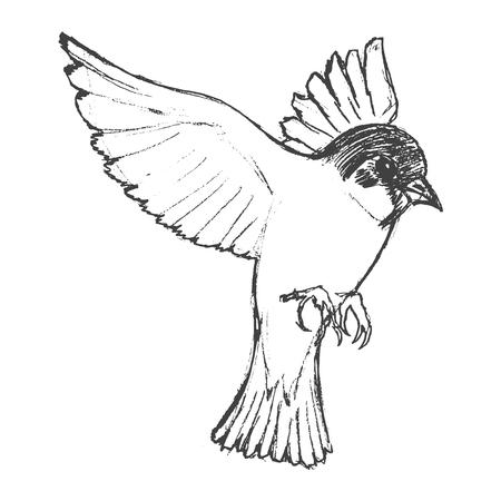 vector, sketch, hand drawn illustration of tit bird