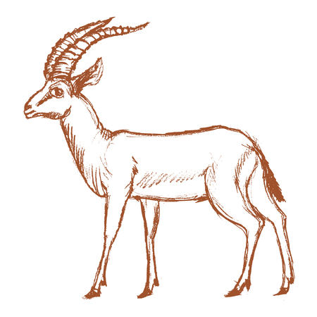 vector, sketch, hand drawn illustration of antelope