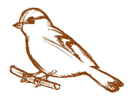 vector, boceto, dibujado a mano ilustración de tit