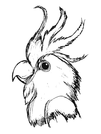 vector, sketch, hand drawn illustration of parrot Ilustrace