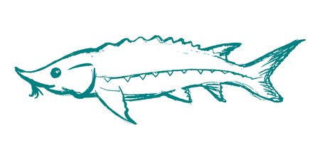 vector, schets, hand getekende illustratie van steur Stock Illustratie