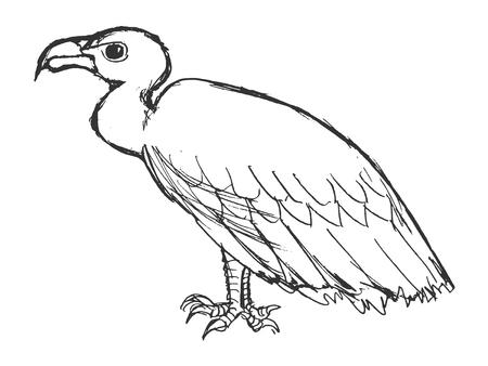 vector, boceto, dibujado a mano ilustración de buitre