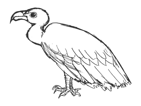 vector, sketch, hand drawn illustration of vulture