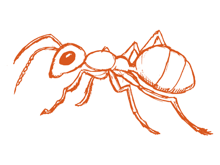 vector, sketch, hand drawn illustration of red ant