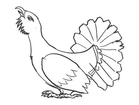 vector, sketch, hand drawn illustration of grouse bird
