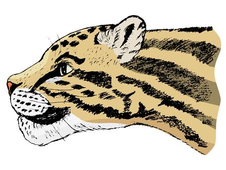 Hand drawn animal image.