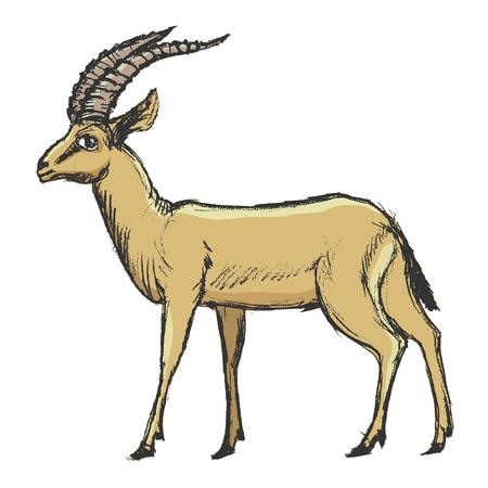 vecteur, coloré, croquis, image tirée par la main de l'antilope Vecteurs
