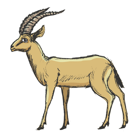 vector, coloured, sketch, hand drawn image of antelope Illusztráció