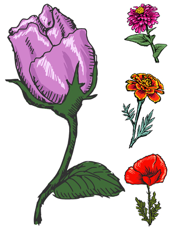Rose and different flowers, set of vectors, summer motive
