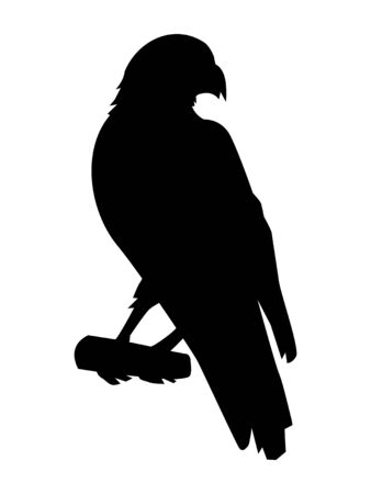 Vector silhouette of hawk. Motive of birds, wildlife, animals, nature
