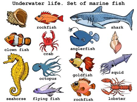 Set of vector, colored, hand drawn, sketch illustrations of different underwater animals and objects. Side view. Motives of wildlife, nature, ecology, education, seafood, diving, exotic adventures Ilustrace