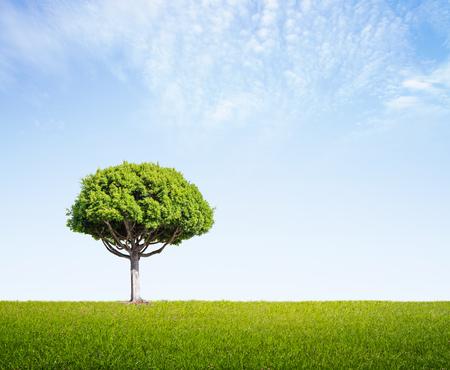 big tree: green field with big tree