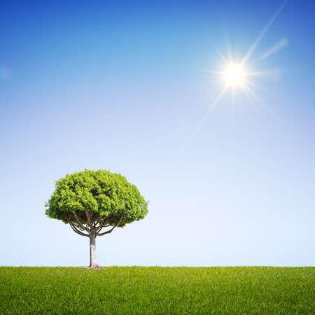 big tree: green summer field with big tree