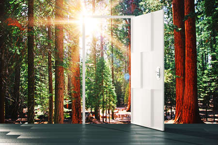 parallel world: Open door to the sunny forest concept