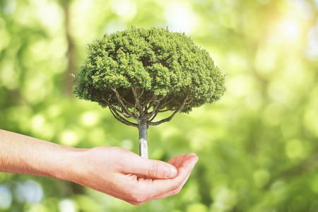 Концепция роста с рукой, держащей дерево Фото со стока