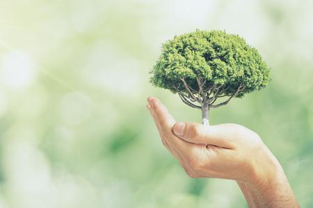 Mano masculina que sostiene el árbol sobre fondo verde borroso bokeh al aire libre. Concepto de seguridad ecológica Foto de archivo