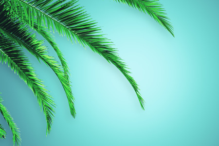 Creative blue background with palm trees and copy space. Post card, organic and nature concept