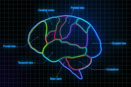 Medical brain research with anatomy of human brain lobes at abstract digital squares background. 3D Rendering