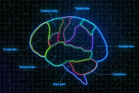 Medical brain research with anatomy of human brain lobes at binary code background. 3D Rendering Stock Photo
