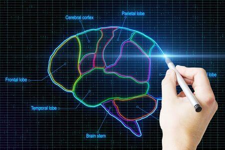 Main de l'homme avec un stylo dessinant un cerveau humain numérique divisé par des lobes à fond abstrait. Banque d'images