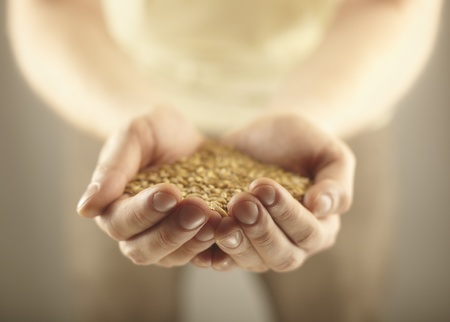 Wheat grains in the male hands. Harvest concept Stock Photo - 11788960