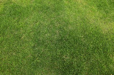 neat: High resolution grass field texture