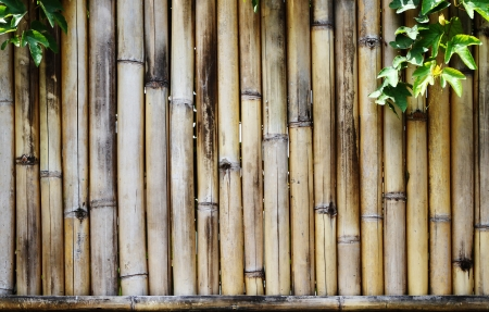 high definition yellow bamboo wall photo