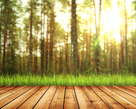 Beautiful sunlight in autumn forest with wood planks floor