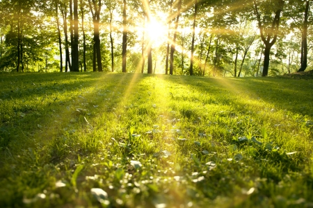 grass area: Sunlight in the green forest, spring time
